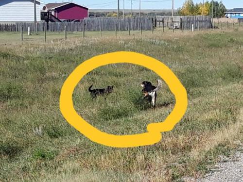 Her der de to hundene som angrep meg i går. Utrivelig!