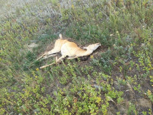Syklet forbi en del dyr som ender sine dager her, trist.