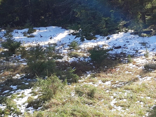 Snø fra i går